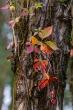 autunno arabeschi