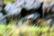 fili di erba montana